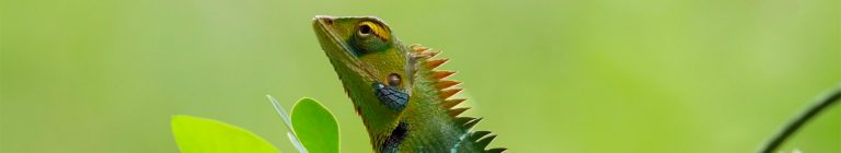 Website Kameleon